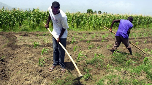 Haiti Needs To Unite And Improve Agriculture ... |Haiti Farming